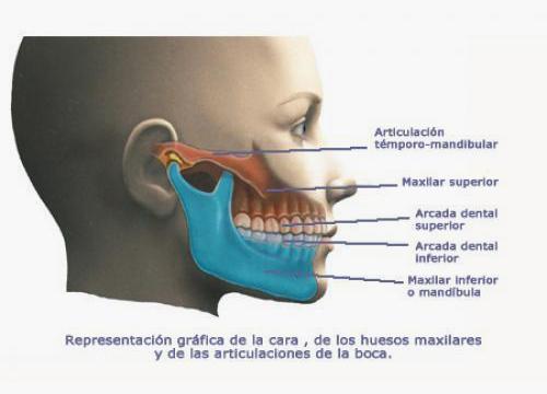 taller-mandíbula-2
